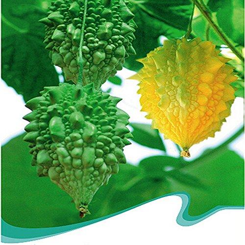 Best Garden Seeds Rare Bitter Melon Balsam Pear Fruit Seeds, Original Pack, 6 Seeds / Pack, Bitter Gourd Vegetables