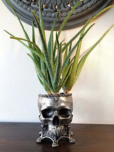 (Human Skull Planter, Pewter Finish)