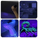 UV Torch, Vansky® Pets Black Light 12Led Lights UV Dogs/Cats Urine Detector, Ultraviolet Flashlight Find Dry Stains on Carpets/Rugs/Floor, 3 x AAA Batteries Included Bild 4