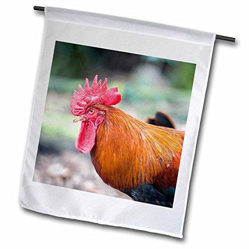 3dRose Danita Delimont - Chickens - Bantam Rooster, Florida, Usa - 18 x 27 inch Garden Flag (fl_259198_2) - Bantam Rooster