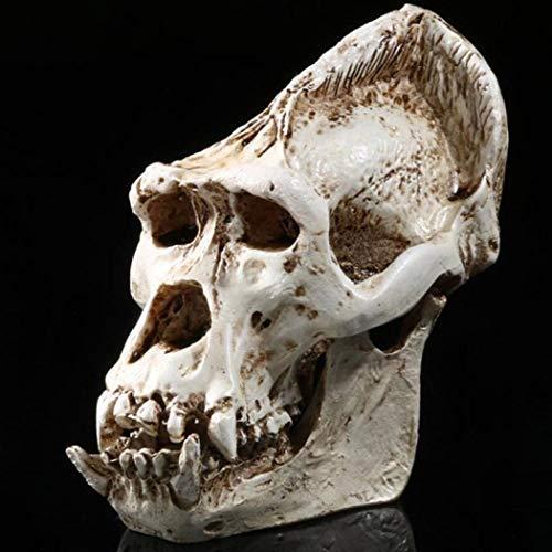 - YOTATO Gorilla Skull Head Resin Replica Medical Model Lifesize Halloween Home Decoration Statue Sculpture Craft Skull
