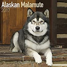 Alaskan Malamute Calendar- Dog Breed Calendars 2017 - Dog Calendar - Calendars 2016 - 2017 wall calendars - 16 Month Wall Calendar by Avonside