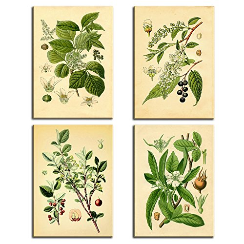 Vintage Picture Framed (Yellow Green Nature Old Fashioned Botanical Plant Flowers Vintage Wall Art Abstract Print Canvas Home Decor Pictures 4 Panel Poster for Living Room Painting Framed Ready to Hang)