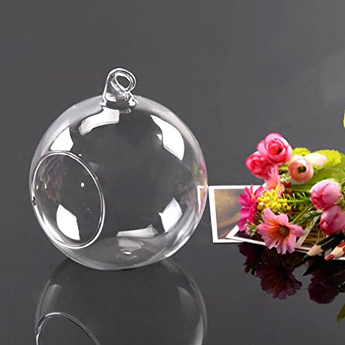 Butterfly Bubble Necklace (Hanging Glass Ball Vase Flower Plant Pot Terrarium Container Decor)
