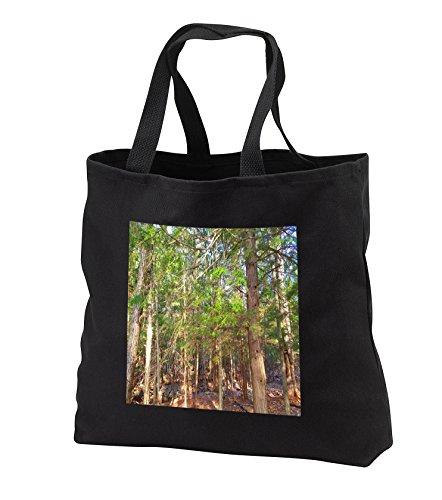 TDSwhite - Summer Seasonal Nature Photos - Sunlight Old Pine Trees - Tote Bags - Black Tote Bag JUMBO 20w x 15h x 5d (tb_284631_3)