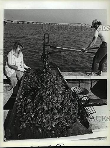 Vintage Photos 1981 Press Photo in Florida, Good Oysters, are synonymous Apalachicola Bay. (Best Oysters In Apalachicola)