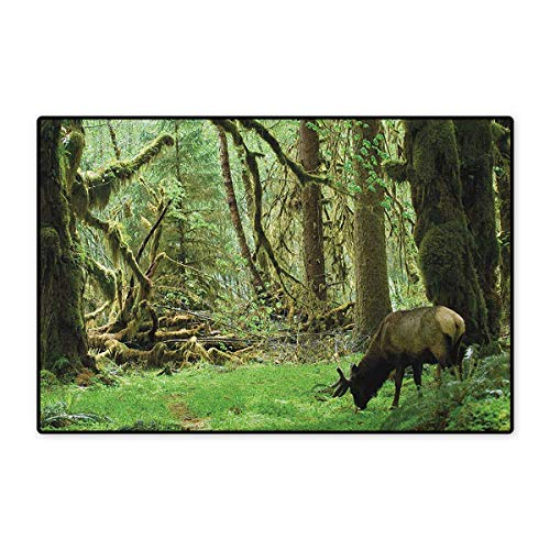 Washington Brown 3x5 Area - Rainforest,Door Mats Area Rug,Roosevelt Elk in Rainforest Wildlife National Park Washington Antlers Theme,Door Mat Doorroom Mat with Non Slip,Green Brown,Size,24
