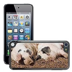 Etui Housse Coque de Protection Cover Rigide pour // M00112269 Piglet cochinillos Cerdo Cerdos Animal // Apple ipod Touch 5 5G 5th