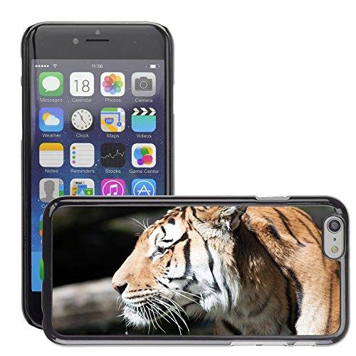 """Just Phone Cases Hard plastica indietro Case Custodie Cover pelle protettiva Per // M00127762 Tigres Big Cat Cat animaux Big Cats // Apple iPhone 6 PLUS 5.5"""""""