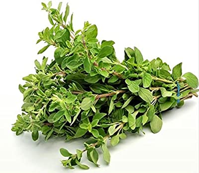 100+ ORGANICALLY GROWN GIANT Sweet Marjoram Seeds Heirloom NON-GMO Fragrant, Delicious and Flavorful, From USA