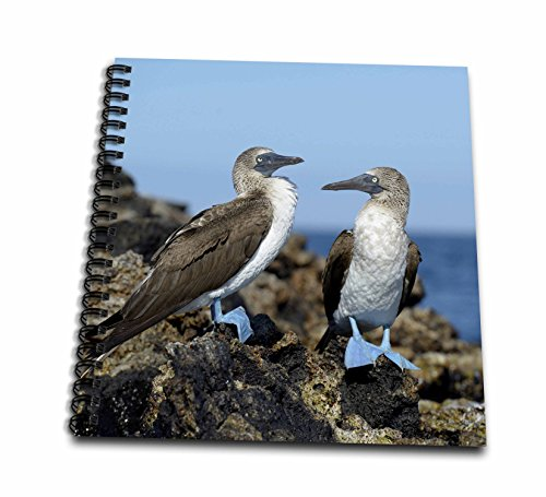 Footed Pastel - 3dRose db_207624_1 Ecuador, Galapagos Islands, Isabela Island Blue-Footed Booby Drawing Book, 8 by 8