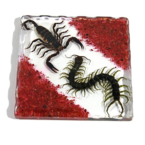 REALBUG Resin Coaster with Sands, Black Scorpion & Centipede