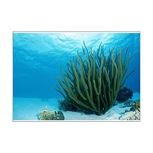 Media Storehouse A1 Poster of Corals on sandy ground, Tobago, Caribbean Sea (12554333) (Sea Puzzle Floor Life)