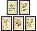 Ink Inc. Psychoactive Plants Botanical Drawings Vintage Art Prints, Set of 5, 8x10in, Unframed, Cannabis Coca Opium Poppy Tobacco Wormwood