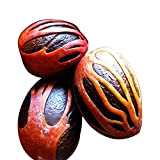 Nutmeg with Mace by 2Tre - 2oz Whole Organic Jamaican Nutmeg makes great gifts.100% Money Back Guarantee