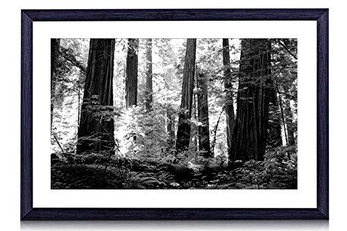 The Redwoods - Art Print Black Wood Framed Wall Art Picture For Home Decoration - Black and White 20