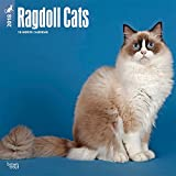 ragdoll cats 2018 12 x 12 inch monthly square wall calendar animals cats multilingual edition