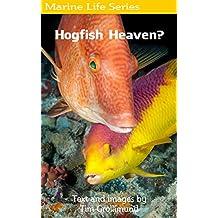 Hogfish Heaven?
