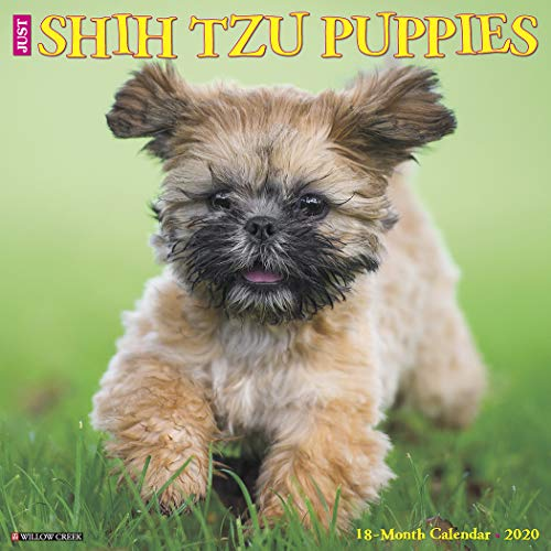 Just Shih Tzu Puppies 2020 Wall Calendar (Dog Breed Calendar)