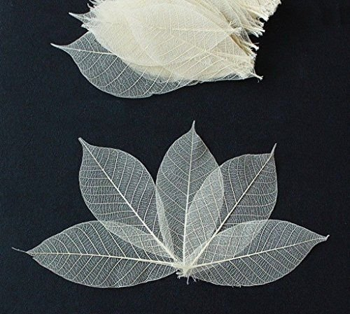 100 Mini Skeleton Leaves Rubber Tree Natural color Scrapbook Craft Card Wedding (Hobbycraft Decorations Christmas Tree)
