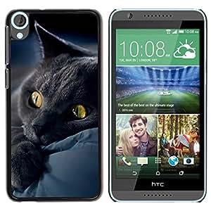 TopCaseStore / la caja del caucho duro de la cubierta de protección de la piel - Black Cat Bombay Chartreux Kitten - HTC Desire 820