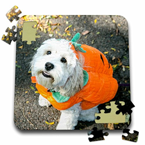 Danita Delimont - Halloween - Pet Halloween contest at Thompkins Square Park, New York City. - 10x10 Inch Puzzle (Dog Halloween Costume Contest)