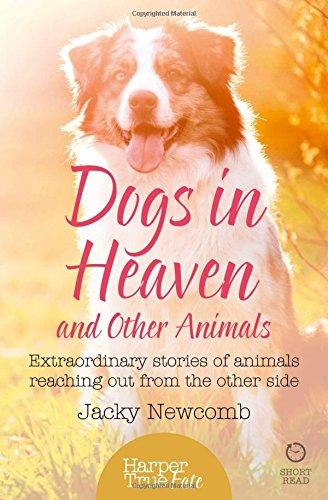 Dogs Heaven Extraordinary Reaching HarperTrue