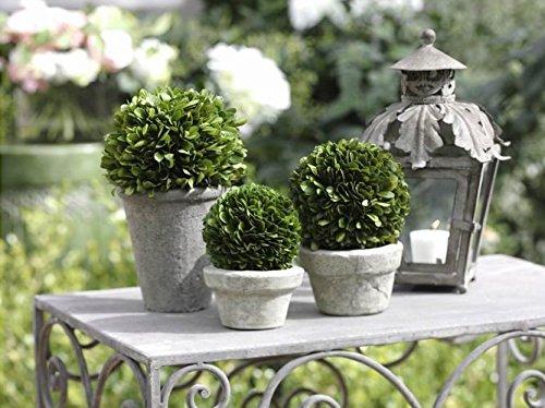 Single Topiary - 10