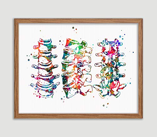 Lumbar Spine Watercolor Art Print Human Anatomy Wall Decor Vertebra View With Spinal Cord Human Wall Art Vertebral Column Detail Artworks Home Office Decor