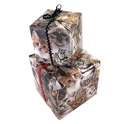 KITTEN GIFT WRAP PAPER  Funny Gift Wrap