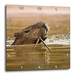 3dRose dpp_85723_1 Brazil, Matto Grosso. Capybara wildlife - SA04 JMC0046 - Joe and Mary Ann McDonald - Wall Clock, 10 by 10-Inch