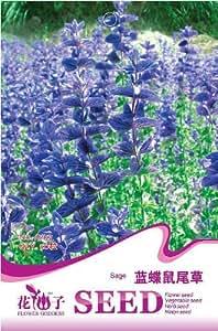 Rare Flower Blue Butterfly Sage Seeds, Original Package 50pcs Garden bonsai Flower seeds, Easy Grow Salvia officinalis
