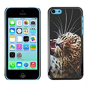 FECELL CITY // Duro Aluminio Pegatina PC Caso decorativo Funda Carcasa de Protección para Apple Iphone 5C // Puma Big Cat Savannah Nature Animal Africa
