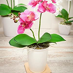 Fiore 4 x 14 Inch Artificial Orchids, 12 Potted Fake Orchids – 5 Blooms, Use As Table Centerpieces, Home Decor, Or Office Decor, Purple Plastic Faux Orchids, In Porcelain Pots, For Weddings Or Events