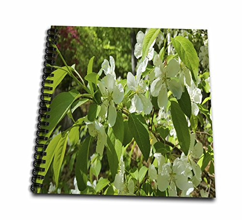 3dRose TDSwhite - Spring Seasonal Nature Photos - Flowering Trees Springtime - Memory Book 12 x 12 inch (db_284265_2)