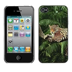 - TREES BIG LEOPARD CAT RAINFOREST JUNGLE TREE - - Monedero pared Design Premium cuero del tir???¡¯???€????€?????n magn???&rs
