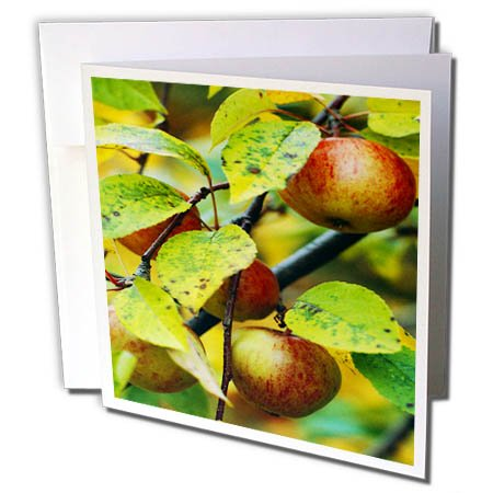 3dRose TDSwhite – Farm and Food - Food Apple Tree - 6 Greeting Cards with Envelopes (gc_285118_1) by 3dRose