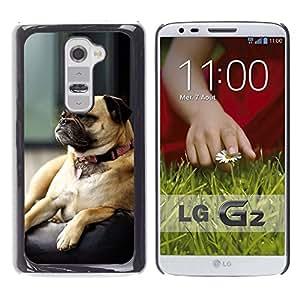 - BROWN SLEEPING PUG CUTE SMALL DOG GRUMPY - - Monedero pared Design Premium cuero del tir???¡¯???€????€?????n magn???¡¯