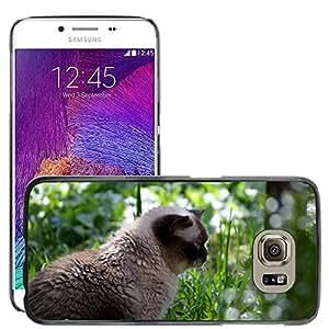 Etui Housse Coque de Protection Cover Rigide pour // M00133500 Cat Mieze British Shorthair Mascotas // Samsung Galaxy S6 (Not Fits S6 EDGE)