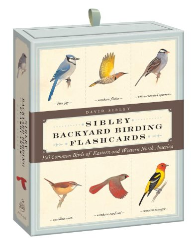 Sibley Backyard Birding Flashcards: 100 Common Birds of East