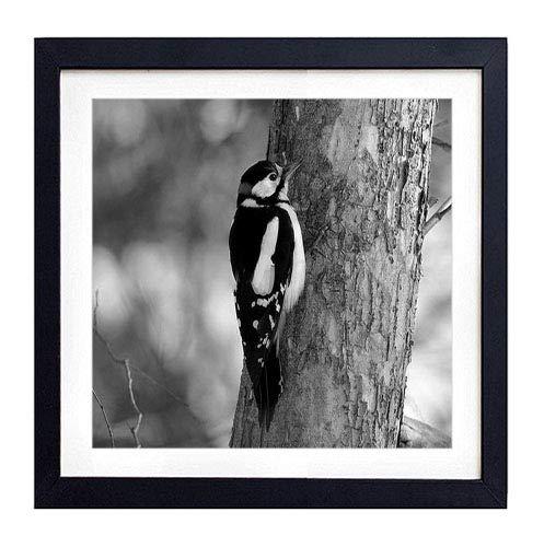 (GLITZFAS PRINTS Framed Wall Art - Woodpecker Bird Tree(1) - Art Print Black Wood Framed Wall Art Picture for Home Decoration - 20