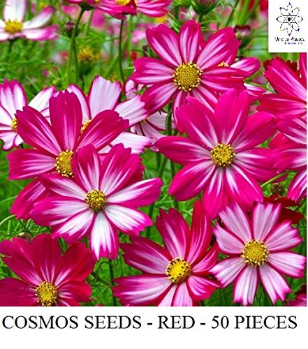 Unique Plastic Industries Cosmos Flower Seed (White-Red, Pack of 50) (B07NS4KDJG) Amazon Price History, Amazon Price Tracker