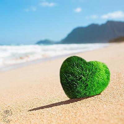 6 Nano Luffy Marimo Moss Balls ? Unique Green Spherical Plants - Create Legendary Lush Landscape in Your Aquarium - Natural Habitat for Triops/Sea Monkeys - Perfect D?cor