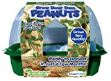 DuneCraft Sprout 'n Grow Greenhouses Peanuts
