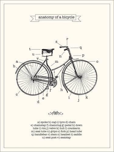 Póster 30 x 40 cm: Vintage Parts of a Bicycle Anatomy de Nory Glory Prints - impresión artística, Nuevo póster artístico: Nory Glory Prints: Amazon.es: Hogar
