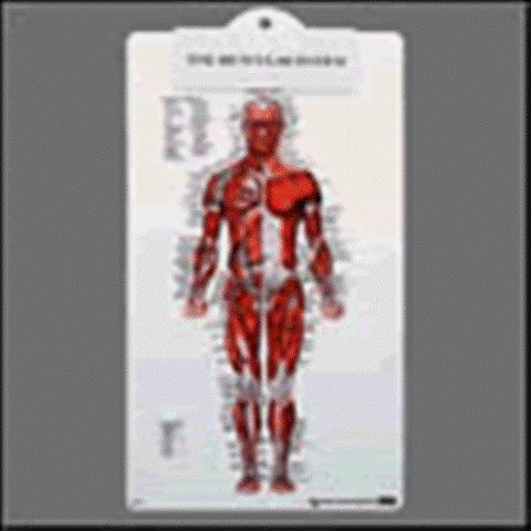 System Clipboard - Muscular System Clipboard