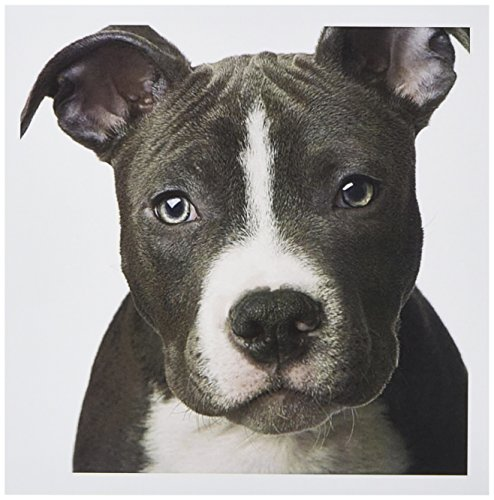 3dRose American Pit Bull Terrier Puppy - Greeting Cards, 6 x 6 inches, set of 12 (gc_4240_2)