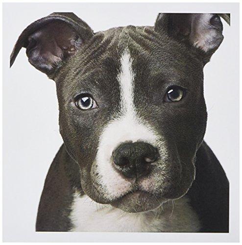3dRose American Bull Terrier Puppy