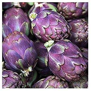 David's Garden Seeds Artichoke Purple Italian Globe SL8832 (Purple) 25 Non-GMO, Heirloom Seeds
