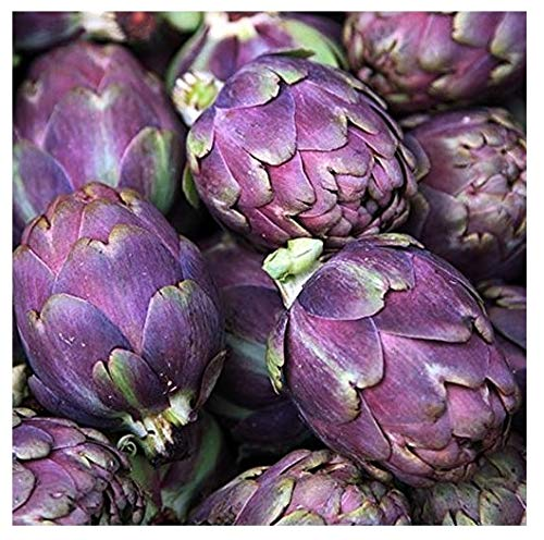 David's Garden Seeds Artichoke Purple Italian Globe SL8832 (Purple) 25 Non-GMO, Heirloom Seeds